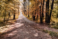 Autumn forest pathway in a sunny Royalty Free Stock Image