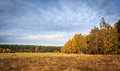 Autumn forest in poland beautiful colors of autmn Royalty Free Stock Photo