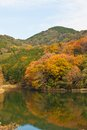 Autumn forest and pond Stock Image