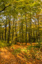 Autumn in the forest portrait format Stock Images