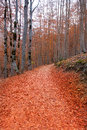Autumn forest in Pyrenees Valle de Ordesa Huesca Spain Stock Photography