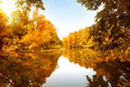 Autumn forest by the river in sunny day Stock Images