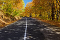Autumn forest road a through the during Royalty Free Stock Photo