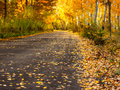 Autumn forest road with gold leaves landscape yellow Stock Photos