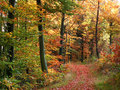 Autumn forest scenery colorful in a in southern germany Stock Image