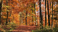Autumn forest scenery colorful in a in southern germany Royalty Free Stock Images