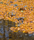 Autumn forest with small brook and orange foliage Stock Photography