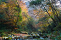 Autumn forest stream Stock Photo