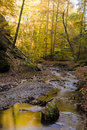 Autumn forest stream Stock Image