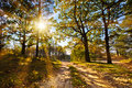 Autumn forest in the sun Royalty Free Stock Photography