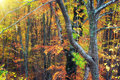 Autumn forest texture composition of nature Royalty Free Stock Photography