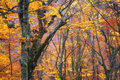 Autumn forest texture composition of nature Royalty Free Stock Photo