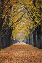 Autumn forest trail / alley with jogger Stock Photo