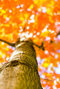 Autumn forest trees from the bottom. nature green wood sunlight backgrounds, Soft focus! shallow depth of field Royalty Free Stock Photo