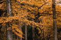 Autumn Forest Trees Royalty Free Stock Photo