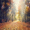 Autumn forest vintage photo of Stock Images