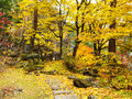 Autumn forest and walking path on mountain Royalty Free Stock Images