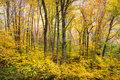 Autumn Forest Western NC Fall Foliage Trees Scenic Nature Photography Royalty Free Stock Photo