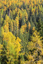 Autumn forest at Ziarska dolina - valley in High Tatras, Slovaki