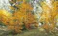 Autumn forest at Ziarska dolina - valley in High Tatras, Slovaki