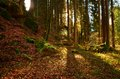 Autumn forrest in flooded with sunlight Stock Photo