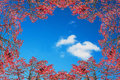 Autumn frame against blue sky. Royalty Free Stock Photo