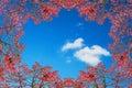 Autumn frame against blue sky. Royalty Free Stock Photo