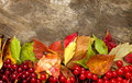 Autumn frame beautiful from colorful foliage and berry Royalty Free Stock Image