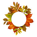 Autumn frame with dry and gold glitter leaves Royalty Free Stock Photo