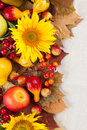 Autumn frame with fruits pumpkins and sunflowers Royalty Free Stock Images