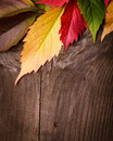 Autumn frame from leaves on the wooden background Stock Image