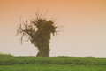 Autumn french alsace landscape lone dead tree mist green orange colours tobacco filter Stock Image