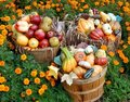 Autumn fruit and vegetables Stock Image