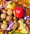 Autumn fruits 4 Royalty Free Stock Photo
