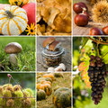 Autumn fruits collage with different Stock Image