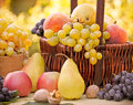 Autumn fruits organic fruits in wicker basket Royalty Free Stock Images