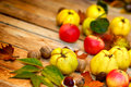 Autumn fruits quinces harvest Royalty Free Stock Photo