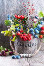 Autumn garden berries on the old wooden background bucket with from Stock Photo