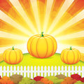 Autumn garden with pumpkins vector Royalty Free Stock Image