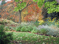 Autumn Garden View Royalty Free Stock Photo