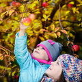 Autumn girl picking apple from tree Royalty Free Stock Photo