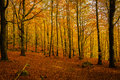 Autumn glade Stock Images