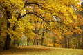 Autumn / Gold Trees in a park Royalty Free Stock Photography