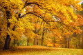 Autumn / Gold Trees in a park Royalty Free Stock Photo