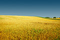 Autumn Golden Field Landscape,...