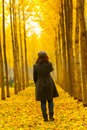 Autumn golden ginkgo trees and young woman Royalty Free Stock Photo