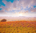Autumn golden red vineyards sunset in utiel requena at spain Royalty Free Stock Photo
