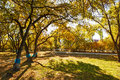 The autumn golden trees and shadows photo taken in china s heilongjiang province daqing city city forest public garden time is Royalty Free Stock Photography