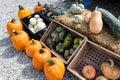 Autumn Gourds, Pumpkins And Sq...