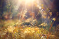 Autumn grass with morning dew in sunlight closeup Royalty Free Stock Photo